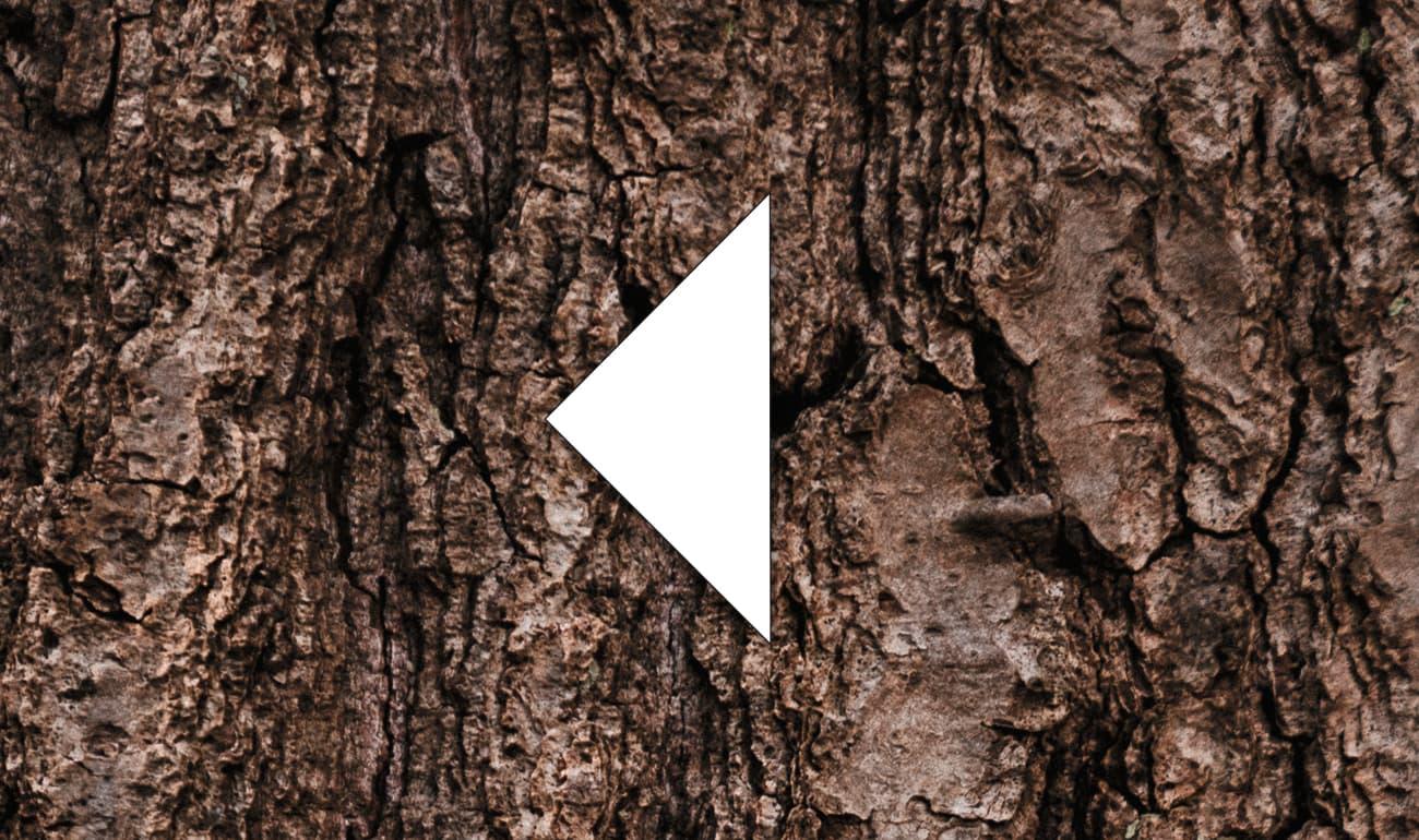 weißes Dreieck auf Baumstamm